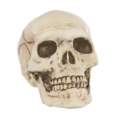 Halloween Jointed Mouth Skull Head Misc Decoration